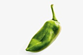 Hungarian pointed pepper