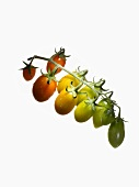 Organic tomatoes (variety Oval Orange)