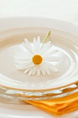 Place-setting with marguerite