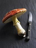 A fly agaric toadstool with knife