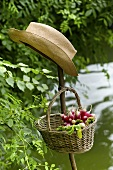 Basket of radishes and a hat