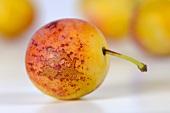 Yellow plum (close-up)