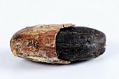A cocoa bean