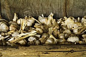 Garlic drying in a wooden box