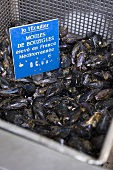 Fresh mussels in a container at a market (France)