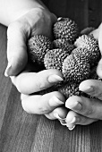 Hands full of lychees