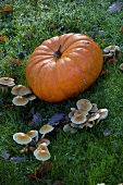 Pumpkin and mushrooms in grass