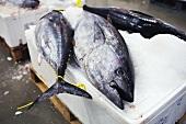 Fresh tuna at a market