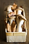 Fresh king oyster mushrooms & autumn leaves in woodchip basket
