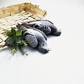 Two unplucked pigeons with bunch of herbs