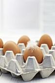 Braune Eier im Eierkarton mit weisser Feder