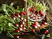 Radishes in a basket and on a plate