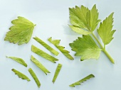 Lovage leaves, whole and shredded