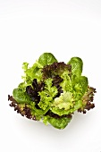 Mixed lettuce leaves in glass bowl