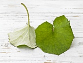 Coltsfoot leaves on white painted wood