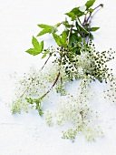 Meadowsweet with flowers