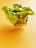 Fresh lettuce with elastic band