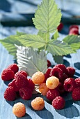 Red and yellow raspberries with leaves