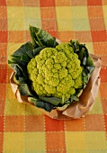 A head of broccoli on paper on checked cloth