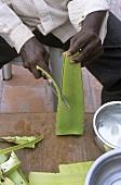 Man cutting open an Aloe vera leaf