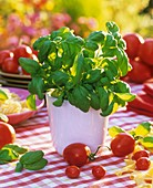 Basil in pot, tomatoes and pasta