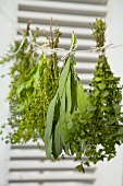 Bunches of herbs hanging up to dry