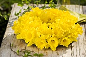 Wreath of daffodils