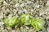 Hops, fresh and dried