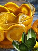 Oranges in Scotch