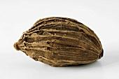 Brown cardamom pod