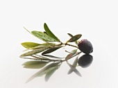 Black olives and olive leaves with drops of water