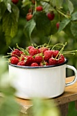 Freshly picked raspberries in a pot