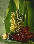 Still life with bunches of bananas and banana leaves