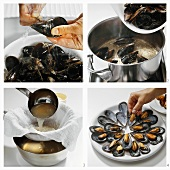 Preparing and cooking mussels & arranging them on a plate