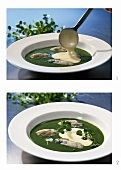 Oyster ragout in cress sauce