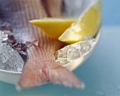 Red snapper with lemon wedges on ice