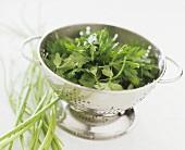 Fresh parsley in a colander