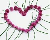 Chive flowers forming a heart