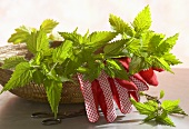 Nettles and gardening gloves in a basket