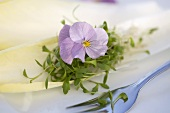 Horned violet with cress on chicory leaf