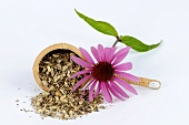 Echinacea tea (dried roots) and purple coneflower