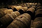 Frapin Cognac maturing in wooden barrels