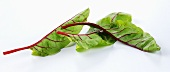 Young Swiss chard leaves