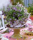 Table decoration of borage flowers