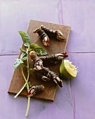 Goose neck barnacles (Mitella pollicipes) on wooden board