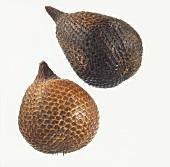 Salak (Snake fruit, Salacca edulis)