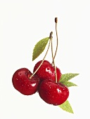 Three sweet cherries with drops of water