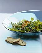 Frühlingssalat mit Portulak
