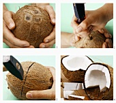 Opening a coconut