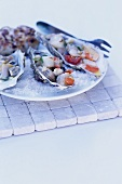 Seafood in oyster shells on sea salt